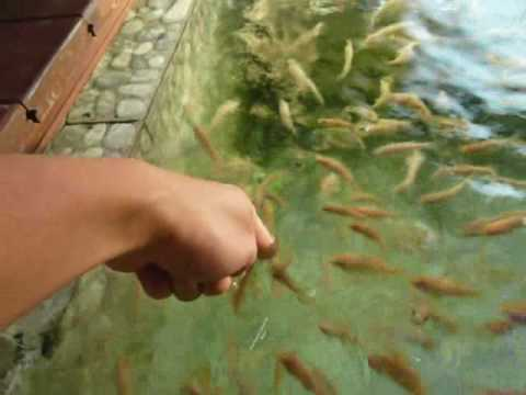 The Kenko Fish Spa in Bangalore – these fish are greedy for you!