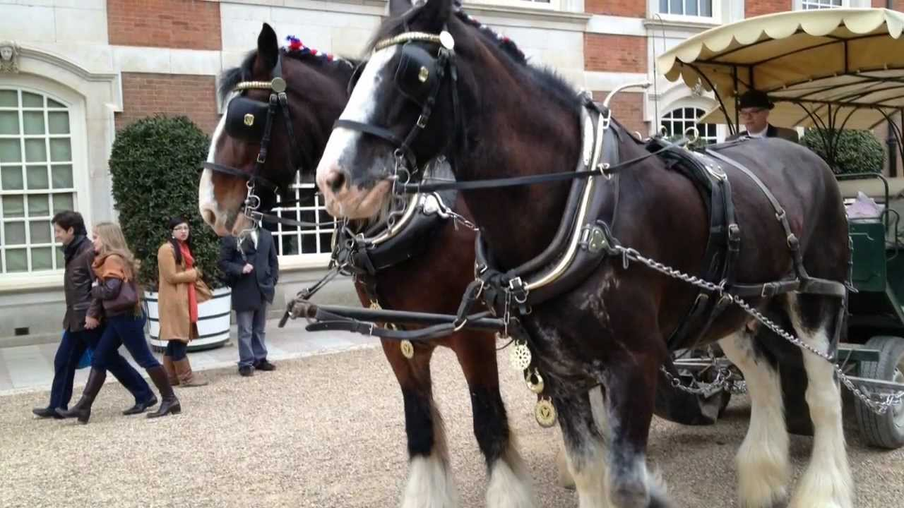 Horse Drawn Carriages At Hampton Court Palace