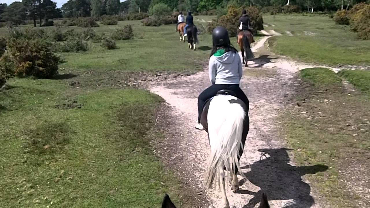 Horse Riding at the Forest Park stables