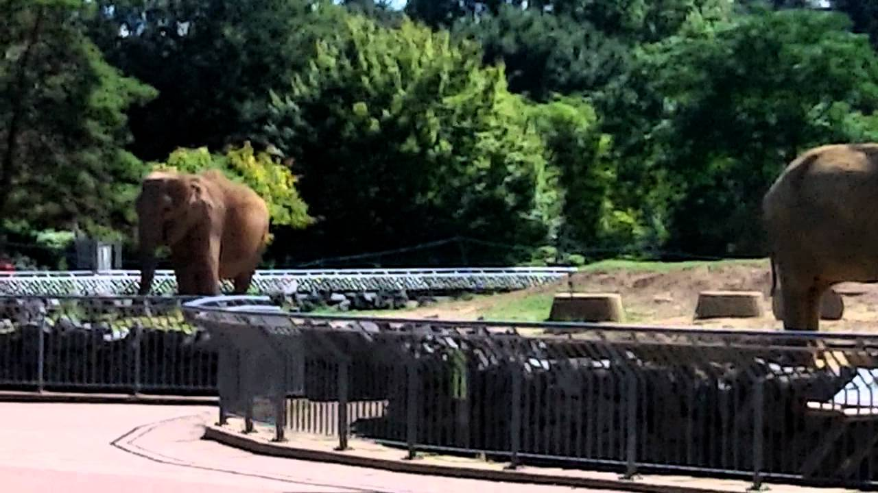 The Elephants at parc de la Tête d'Or in Lyon, Zoo
