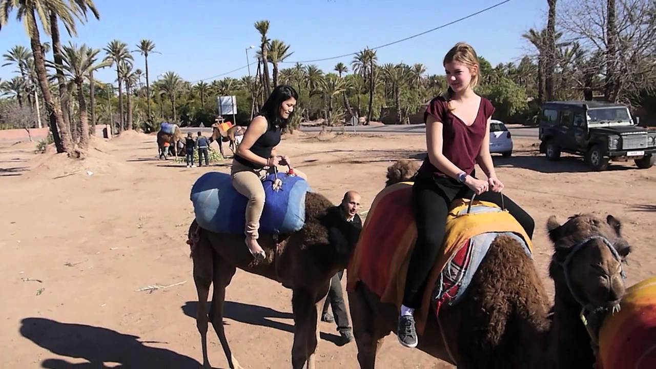 The Grumpy Camel in Marrakech